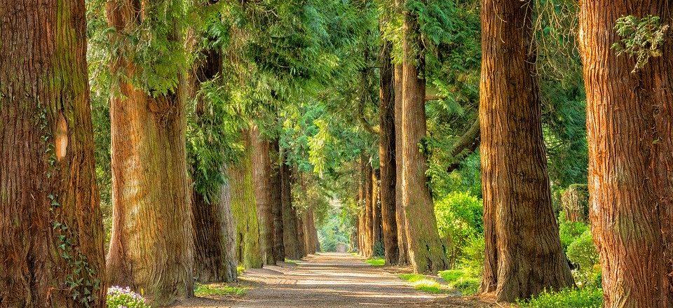 Balade sophrologique en pleine conscience en forêt